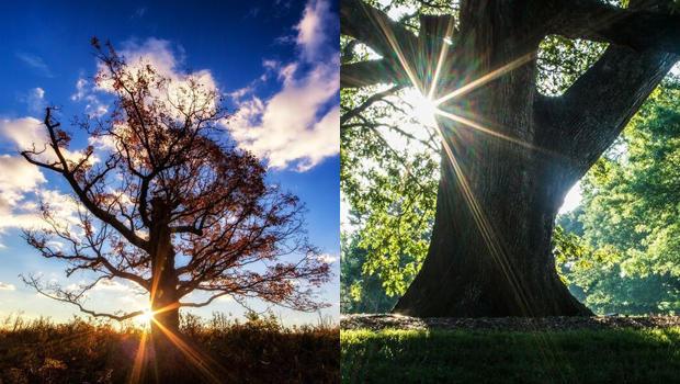 signal-tree-at-fishers-hill-battlefield-strasburg-va-brompton-oak-battle-of-the-wilderness-fredericksburg-va-photos-buddy-secor.jpg