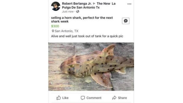 Shark stolen: San Antonio Aquarium horn shark has now been