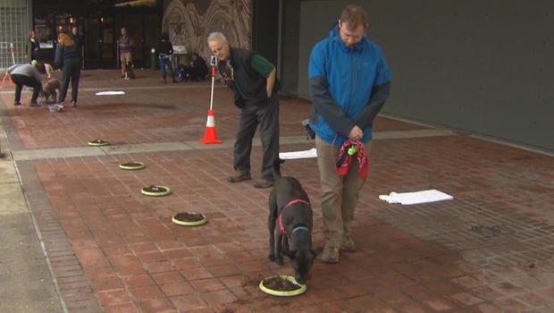 truffles-dogs-in-training-620.jpg