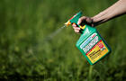 FILE PHOTO:    A woman uses a Monsanto's Roundup weedkiller spray without glyphosate in a garden in Ercuis near Paris
