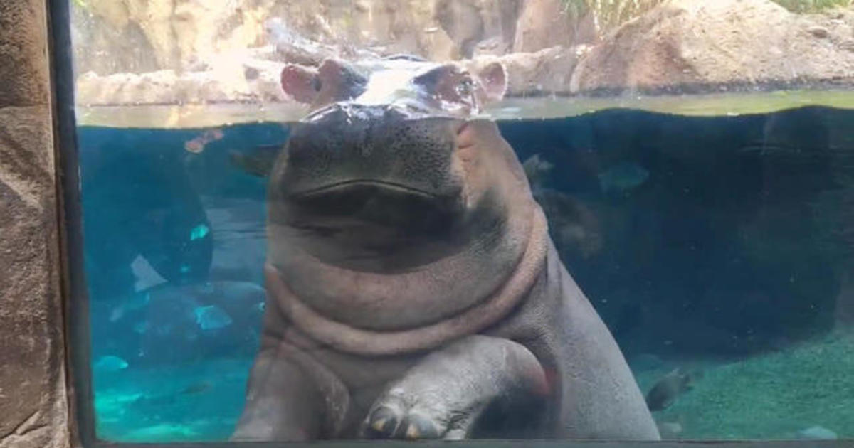 Fiona the Hippo now starring in new children's book