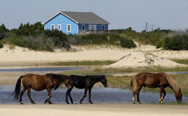 Tropical Weather Wild Horses