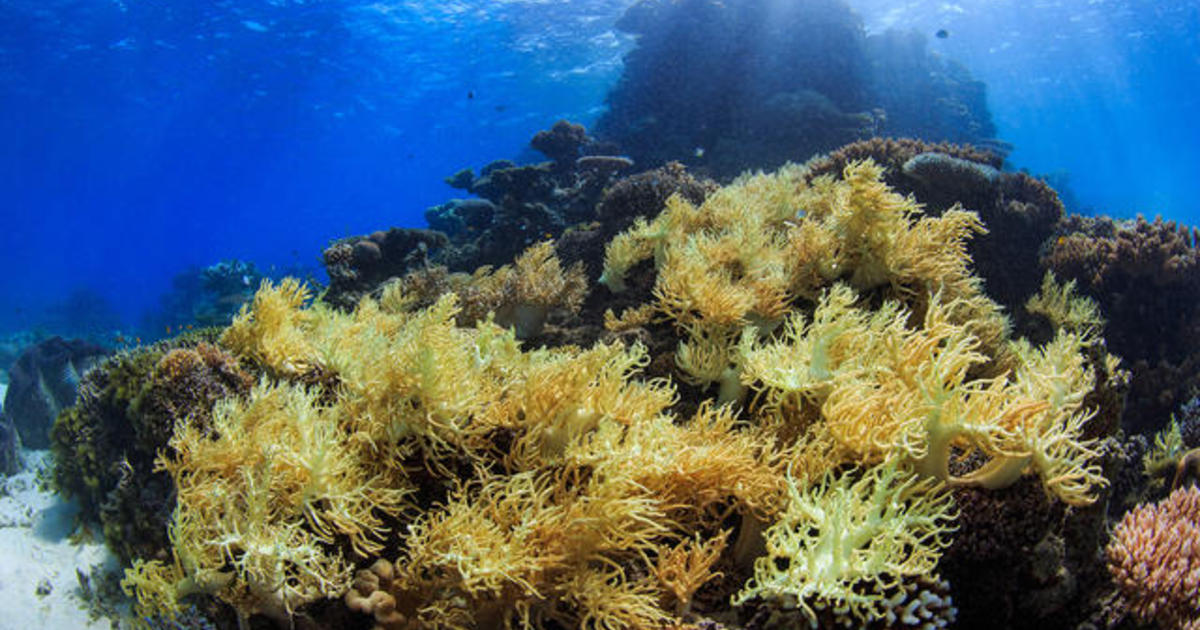 Is The Great Barrier Reef Recovering From Coral Bleaching -1576