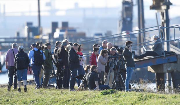 People look from the river bank after a beluga whale was spotted in the River Thames near Gravesend east of London
