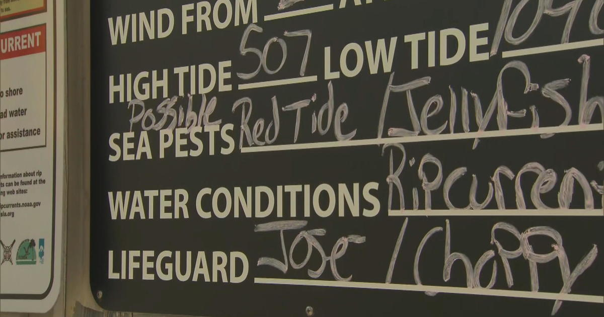 Red Tide Closes Florida Beaches Could Impact Millions In Tourism