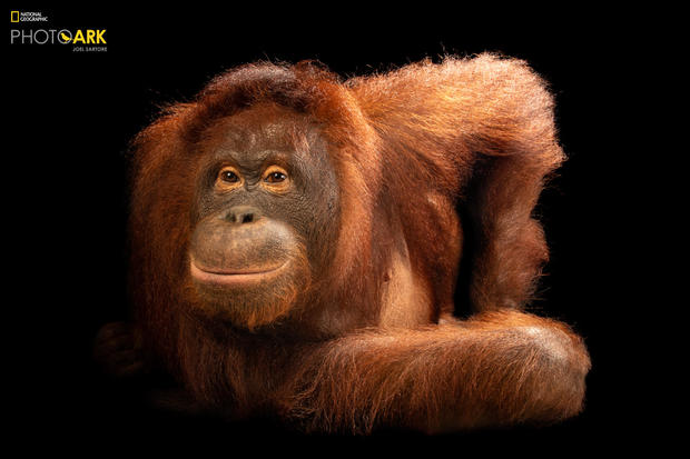 Images from National Geographic photographer Joel Sartore's Photo Ark project