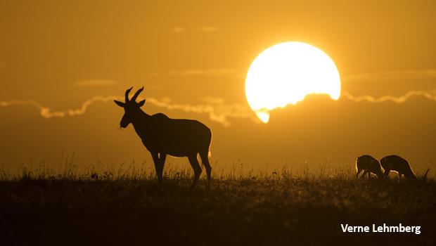 topi-sunset-verne-lehmberg-620.jpg