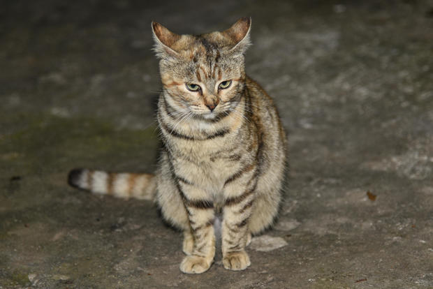 Cats Are Outdoor Killing Machines