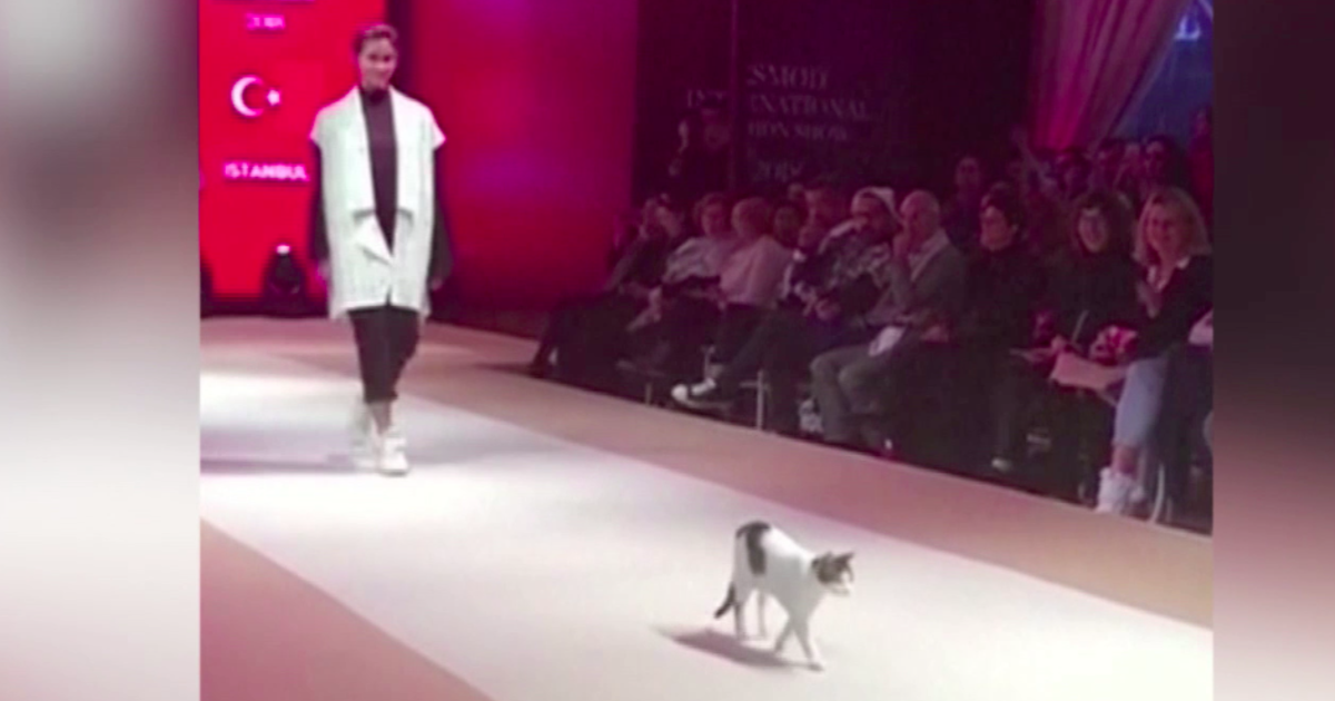 86f9214205 Runway cat  Cat crashes fashion show in Istanbul