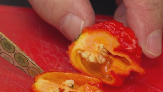 hot-pepper-620.jpg