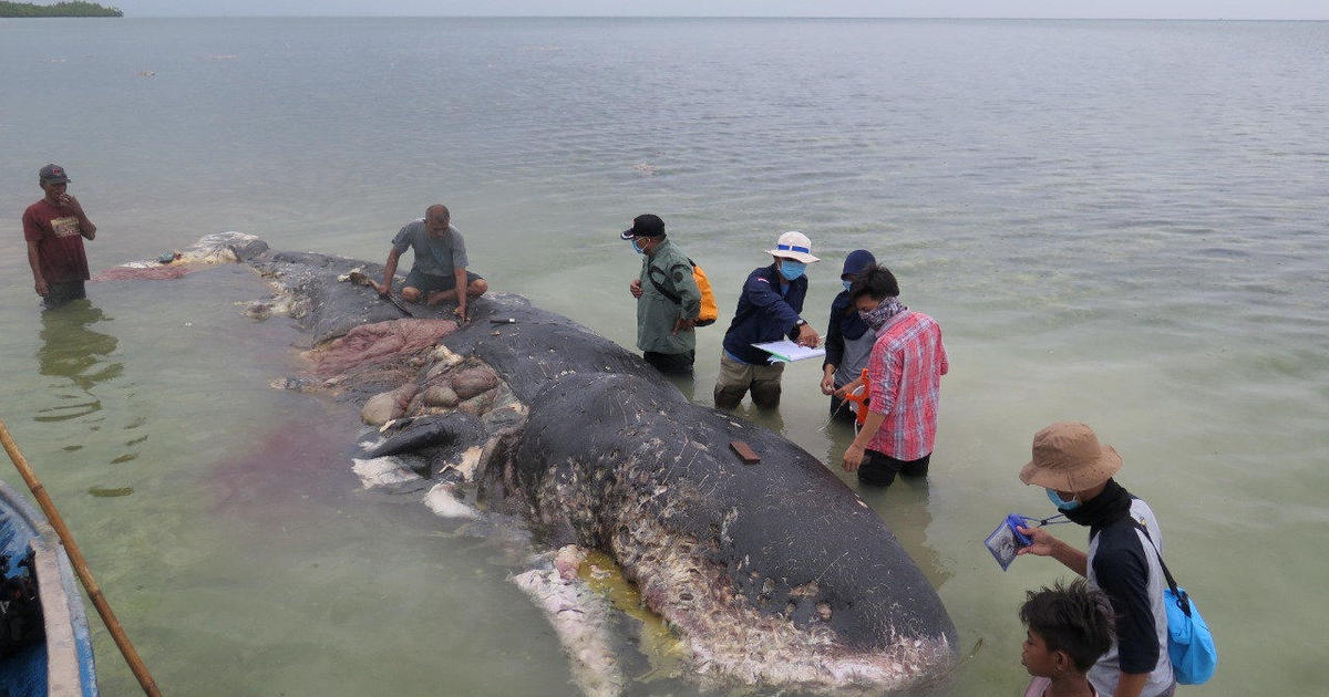 cbsnews.com - Dead whale had 115 plastic cups and 2 flip-flops in its stomach