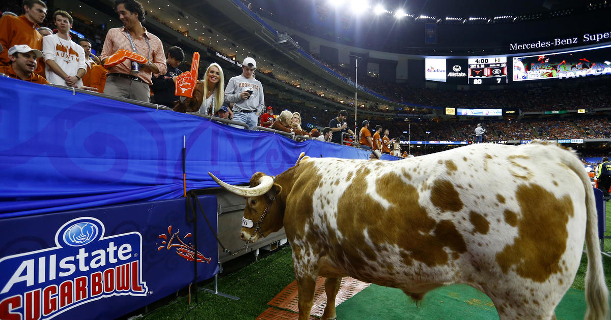 d5598800176 Sugar Bowl  Texas steer mascot Bevo charges Georgia bulldog Uga before game  - CBS News