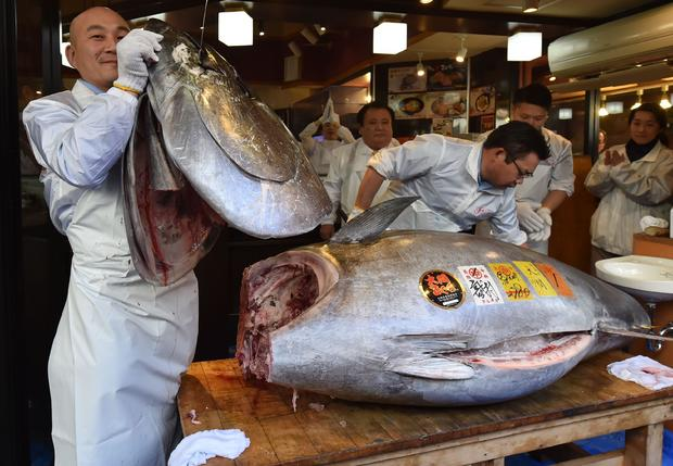 DOUNIAMAG-JAPAN-LIFESTYLE-FISHING-AUCTION-FOOD-TUNA
