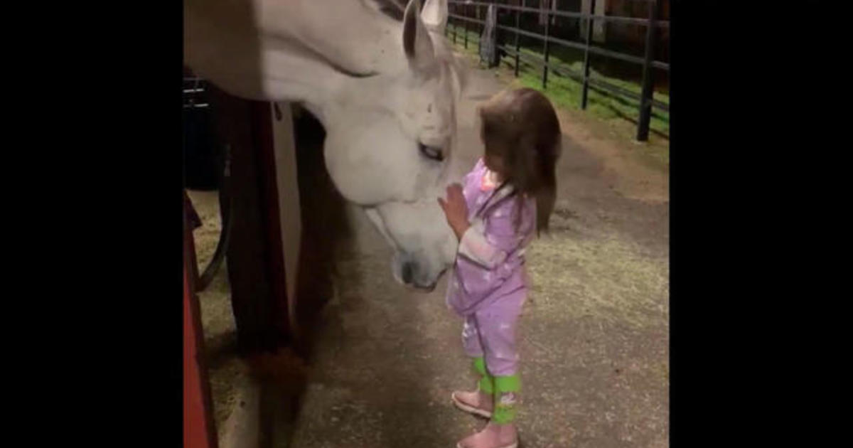Little girl soothes horse in viral video - CBS News