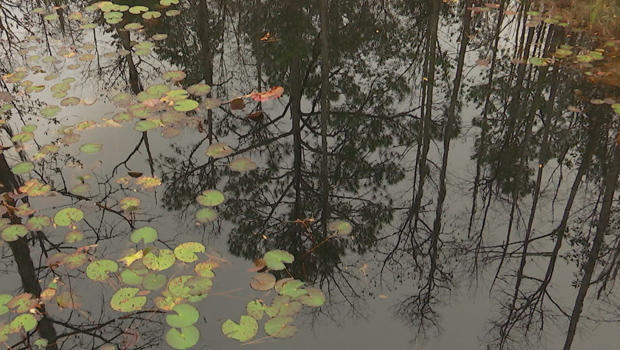 okefenokee-national-wildlife-refuge-swamp-charles-schultz-620.jpg