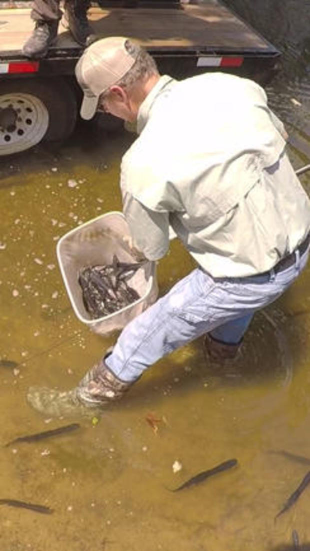 paddlefish-stocking-texas-parks-and-wildlife-244.jpg