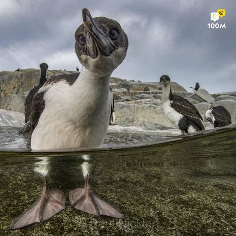 National Geographic's most popular Instagram photos