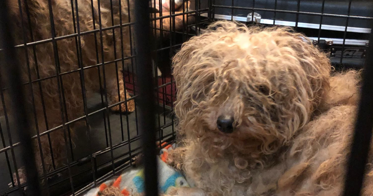 700 dogs rescued: Puppy mill operator arrested after