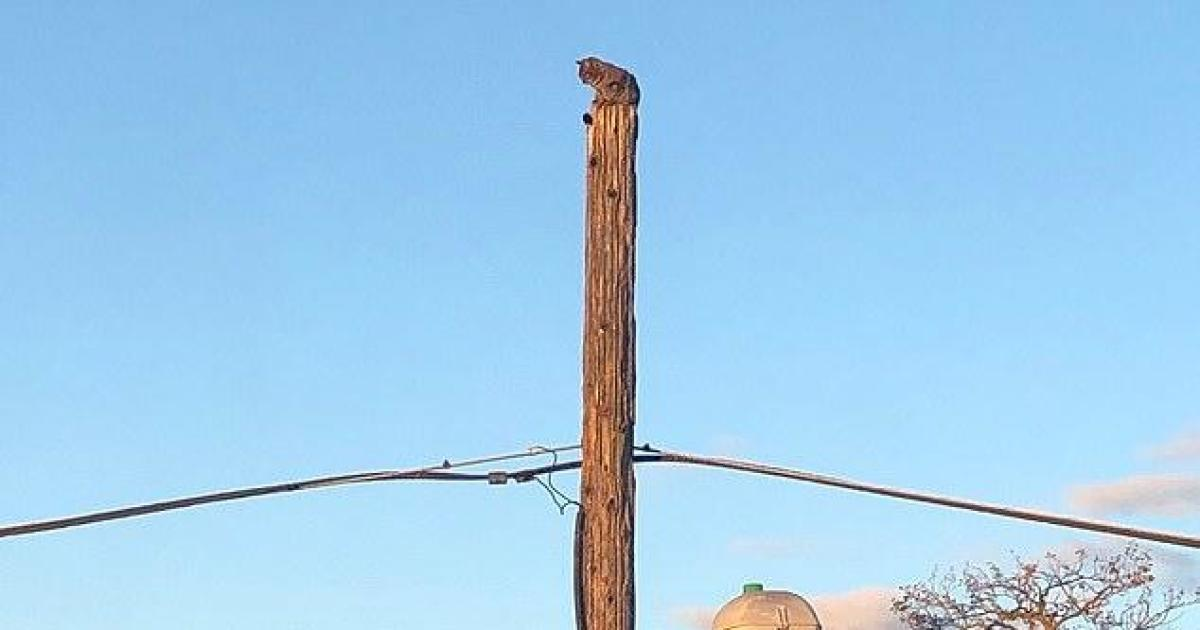 Verizon suspends worker who rescued cat from telephone pole