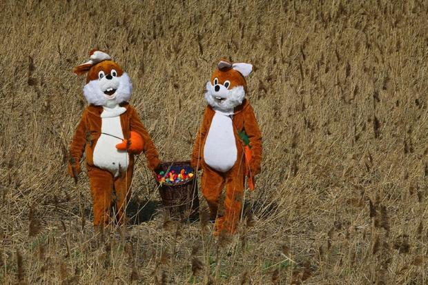 bad-bunnies_germany