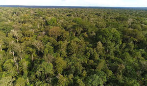 Inside the fight against deforestation in the Amazon rainforest