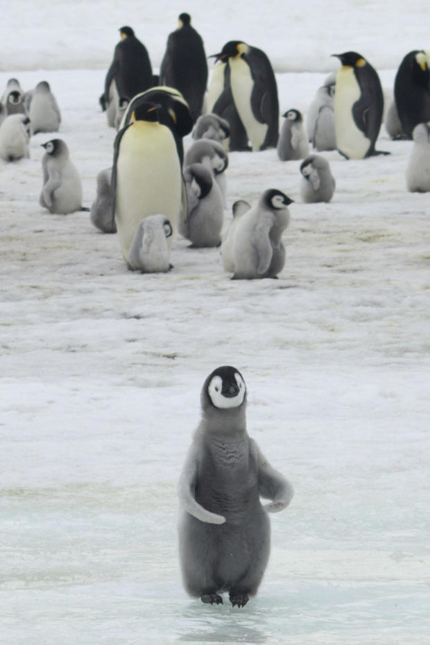 Loss of the Penguins
