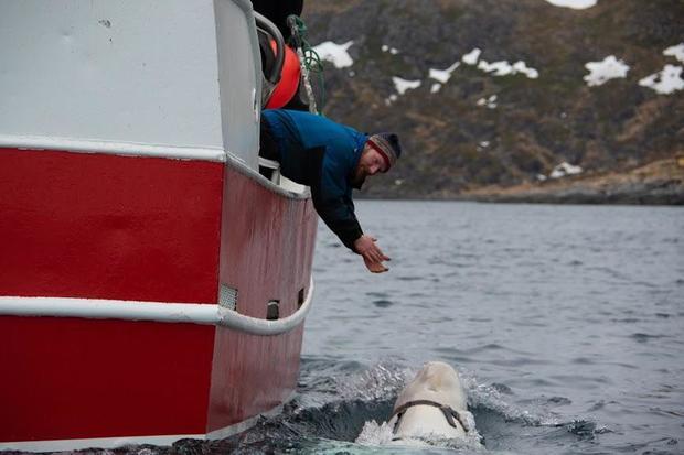 norway-fisheries-whale.jpg