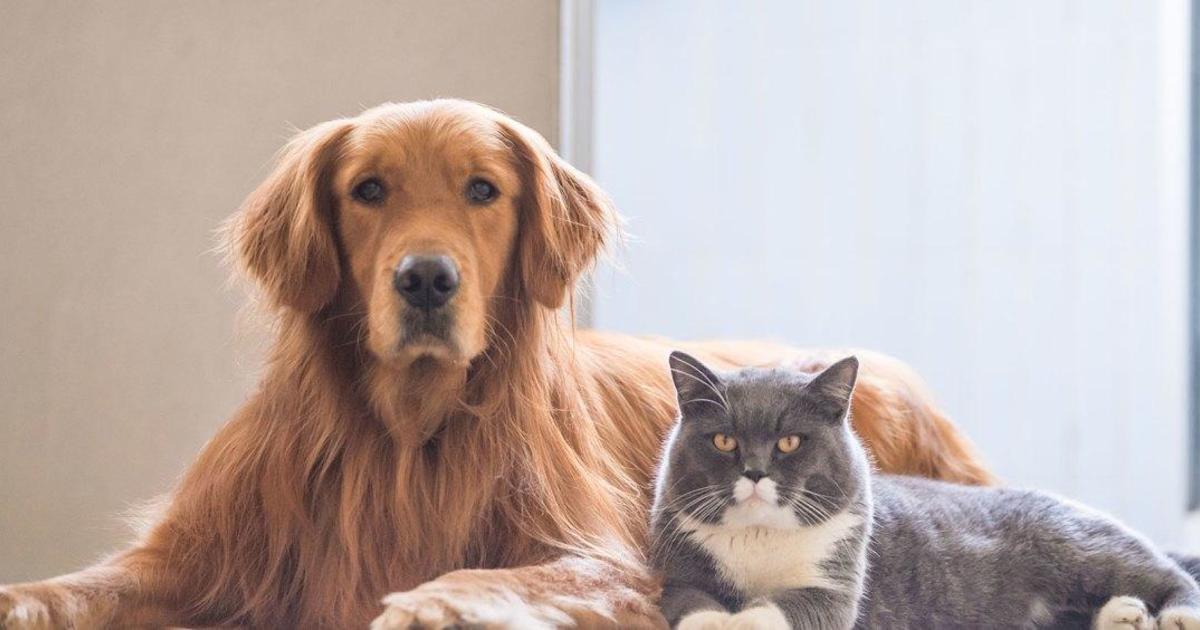 Walmart online pet pharmacy: Retailer expands animal and veterinary