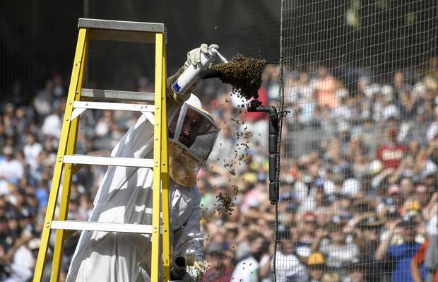 bee swarm — San Diego Padres, Miami Marlins