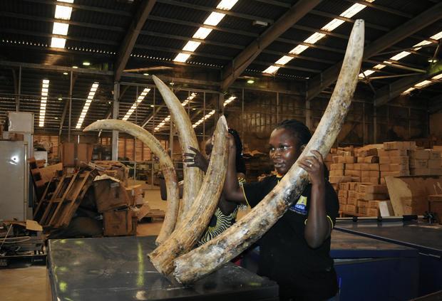 Uganda Ivory Seizure