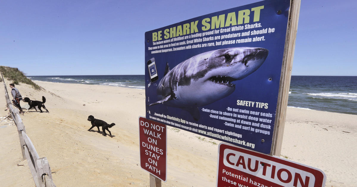 Shark sighting: Cape cod officials on alert amid spike in