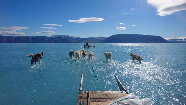 steffen-m-olsen-slaedehunde-i-smeltevand-quanaaq-13062019.jpg