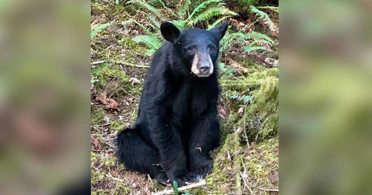 Oregon officials kill bear because it became