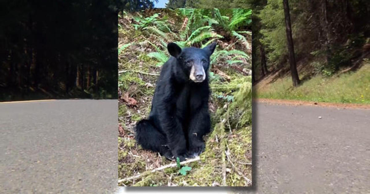 Oregon officials kill bear because it became