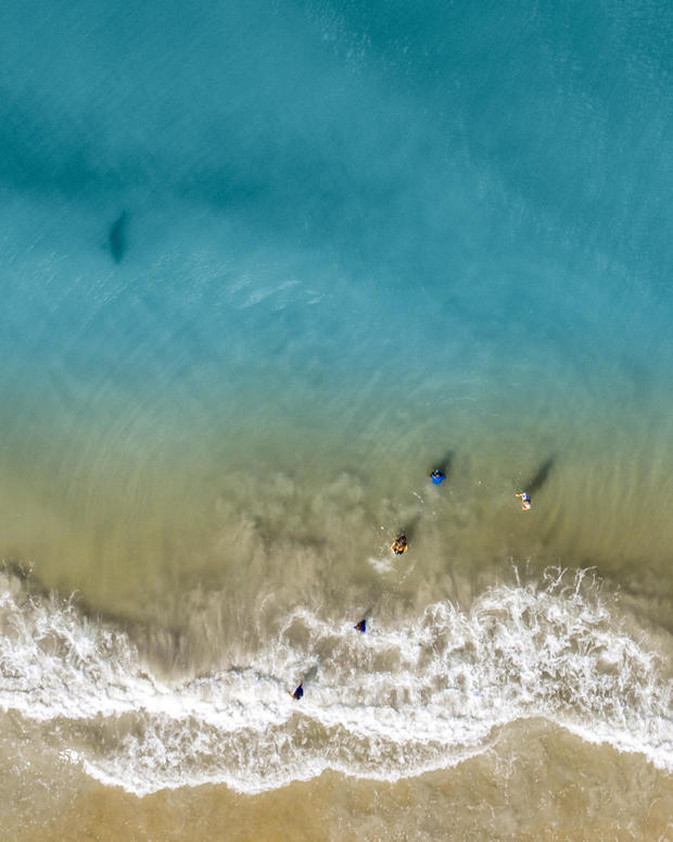 Florida dad using drone spots shark heading straight toward his wife, children