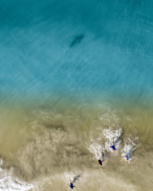Drone camera captures United States family's shark encounter