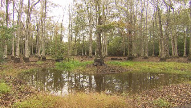 esa-edward-poitevent-louisiana-land-critical-habitat-620.jpg