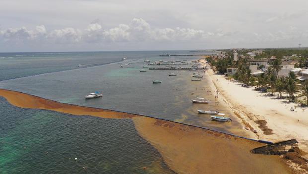 corralling-sargassum-620.jpg