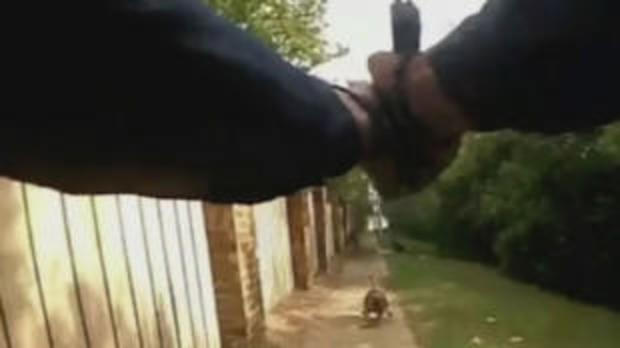 dog-bodycam.jpg