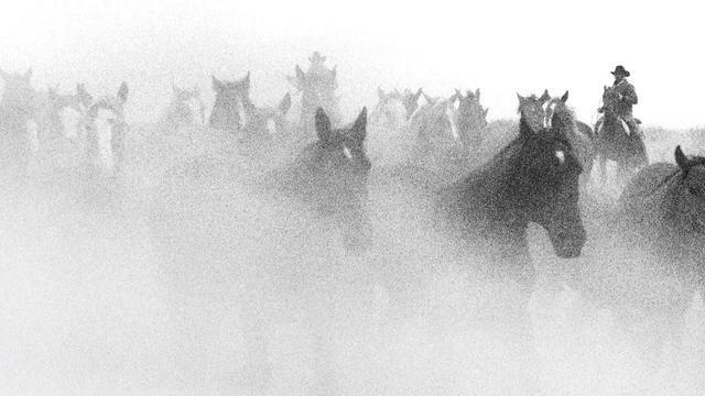 ghost-horses-c1989-barbara-van-cleve-promo.jpg