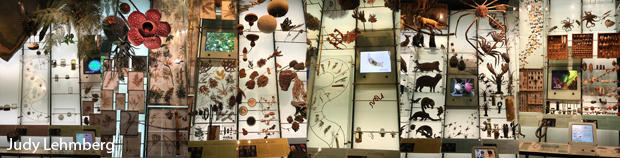 biodiversity-composite-american-museum-of-natural-history-judy-lehmberg-620.jpg