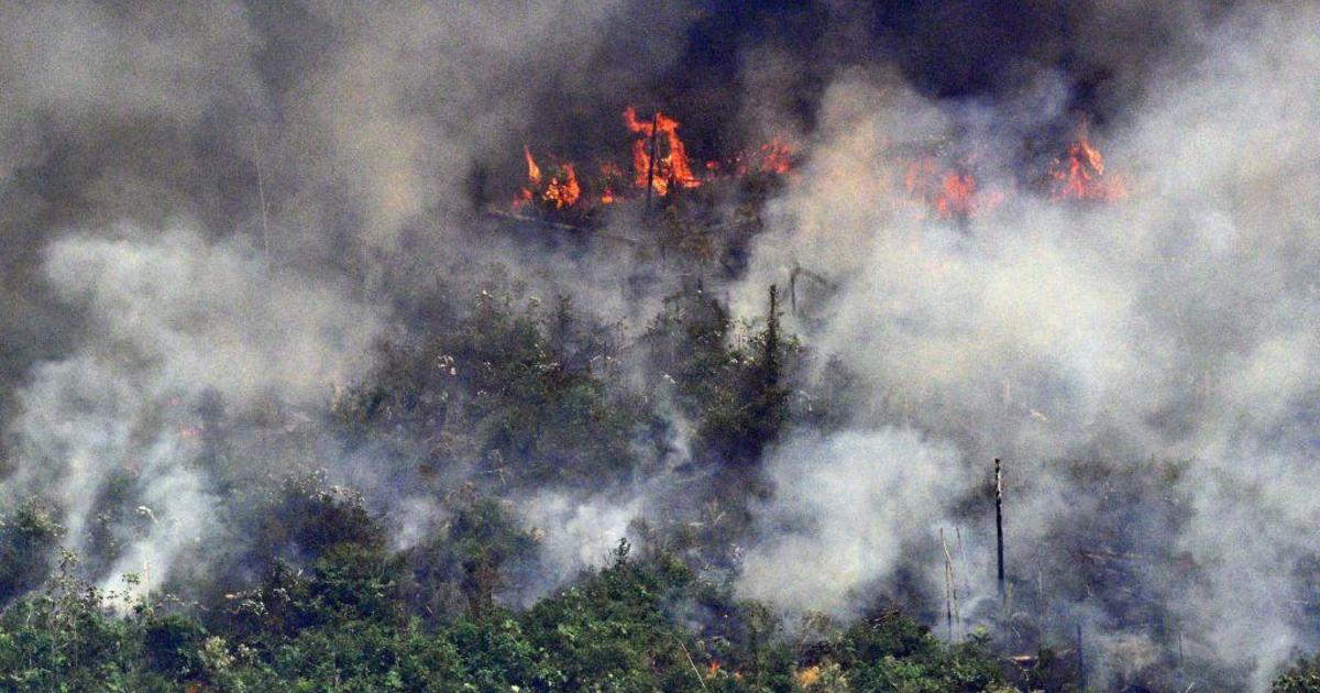 Did U.S. companies and consumers help fuel the fires in the Amazon rainforest?