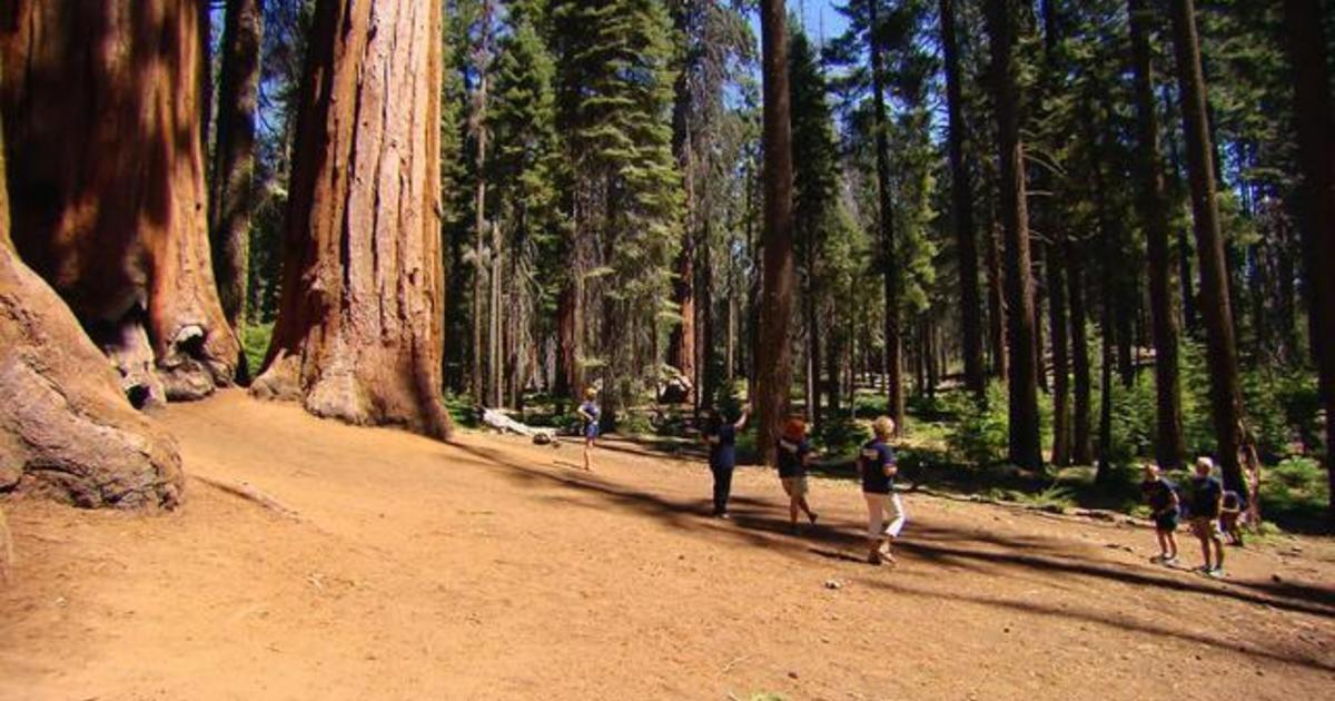 Sequoia National Park, home of the world's largest tree, gets a technological update