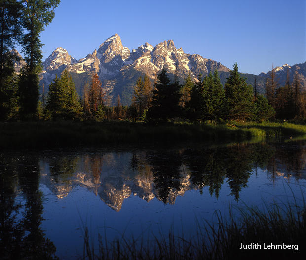 beaver-pond-teton-reflection-judith-lehmberg-620.jpg