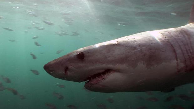sharksarticle.jpg