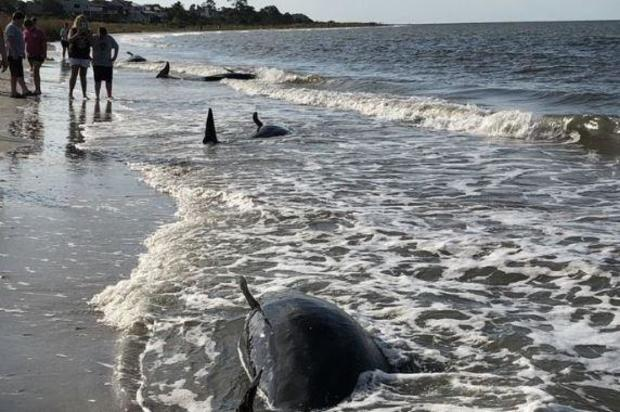 whale-stranding-south-carolina.jpg