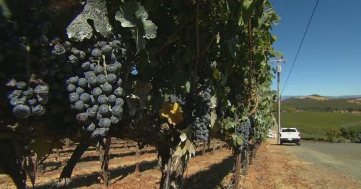 How Napa Valley is preparing for climate change