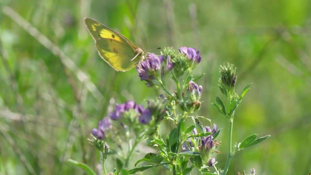 1020-sunmo-naturebutterflies-1955301-640x360.jpg
