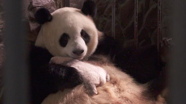 pandafd.jpg