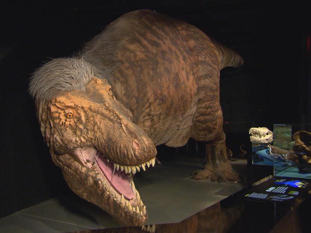 tyrannosaurus-rex-amnh-exhibit-promo.jpg